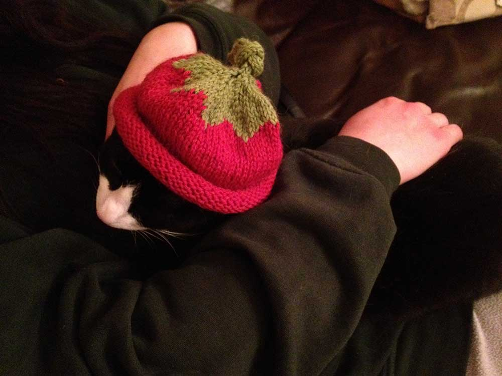 Black and white cat wearing a red and green hat